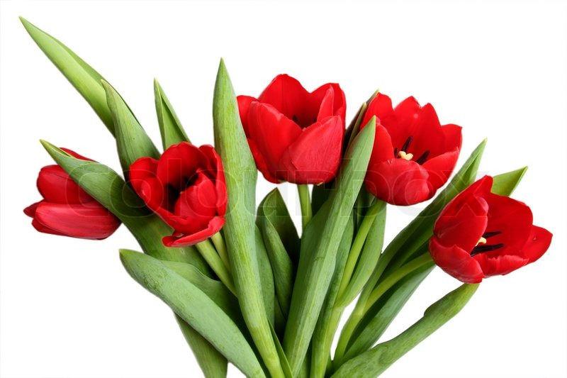 Spring flower - bouquet of red tulips | Stock Photo | Colourbox