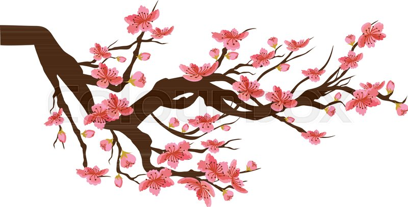 Chinese New Year Sakura Flowers Background Cherry Blossom Isolated White