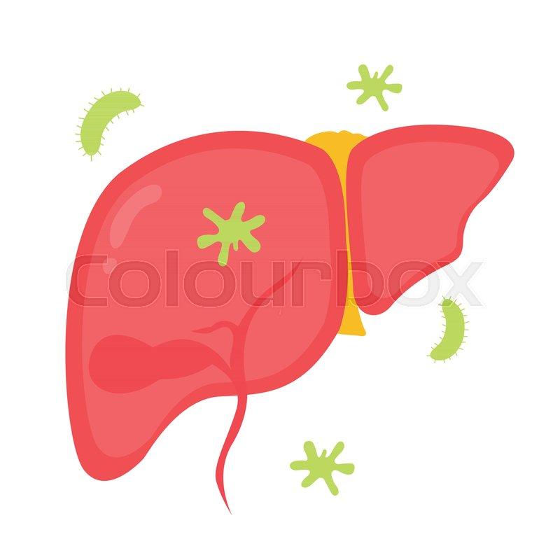 Leber, hirnlappen, metabolism | Vektorgrafik | Colourbox