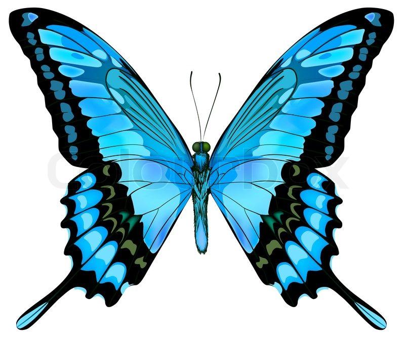 sch u00f6ne vektor isoliert blauer schmetterling vektorgrafik clipart of butterflies border clip art of butterfly black and white