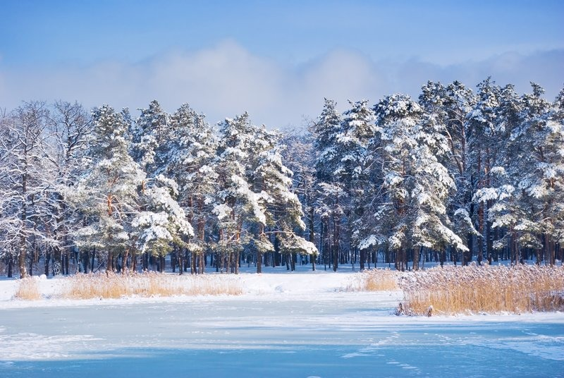 Winter Forest Landscape With Frosty Pond Stock Photo