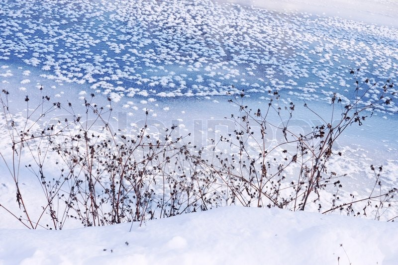 Coastal dried plants on the background of frozen river, stock photo
