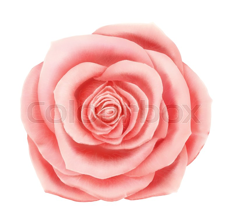 Vector beautiful pink rose floral decorative element photo stock vector of vector beautiful pink rose floral decorative element photo realistic flower icon mightylinksfo