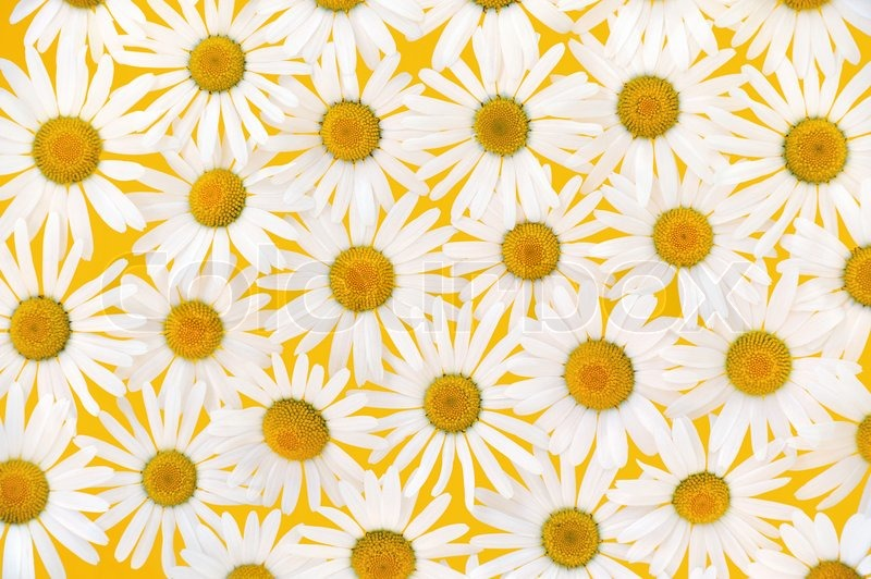 yellow floral pattern - photo #39