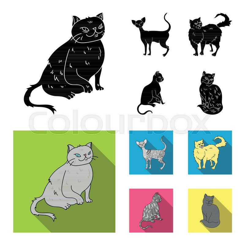 Persian Cornish Rex And Other Species Cat Breeds Set Collection