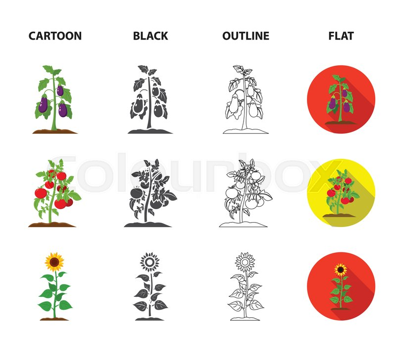 Eggplant Tomato Sunflower And Peasant Set Collection Icons In