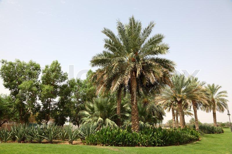Green Tree Property Management Dubai