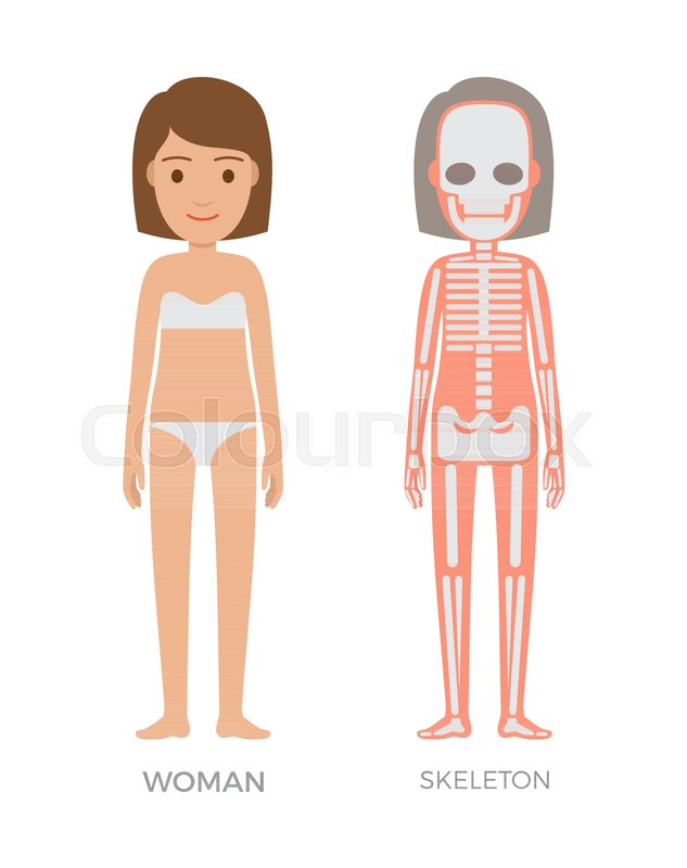 Woman Anatomy And Skeleton Struct Colorful Banner Isolated On White