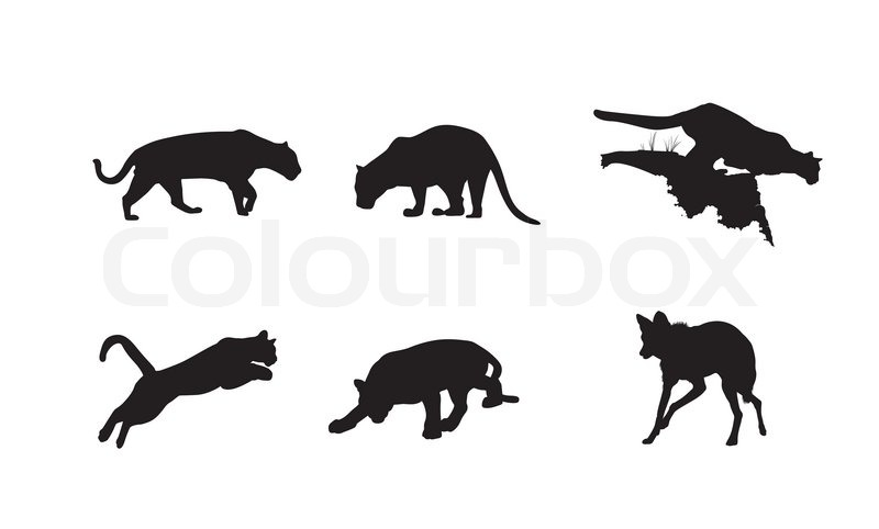 black silhouettes of panther lynx and hyena on the white background
