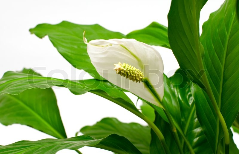 White Flower On The Background Of Green Stock Photo Colourbox