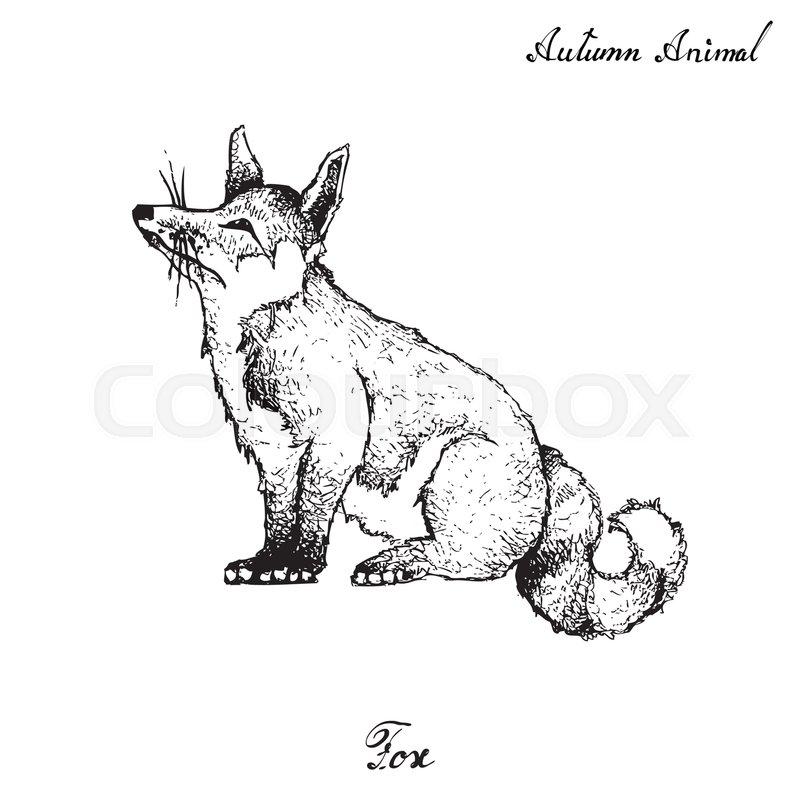 Autumn Animal Illustration Hand Drawn Of Fox Isolated On White
