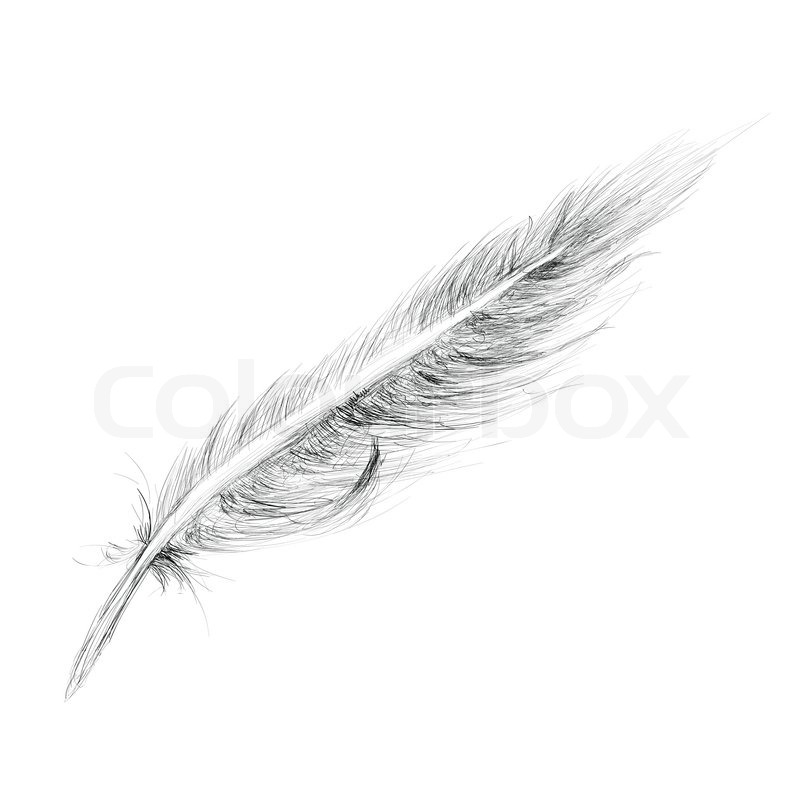 Feather Hand Drawn Sketch Isolated On White Stock Photo