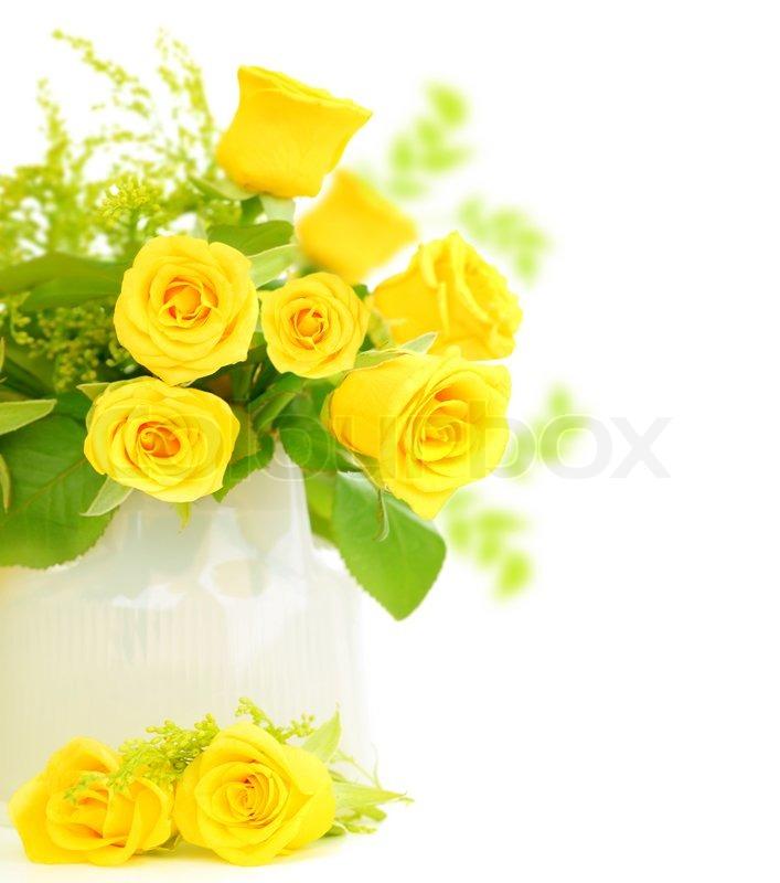 Fresh yellow roses border isolated on white background stock fresh yellow roses border isolated on white background stock photo colourbox mightylinksfo