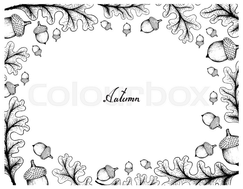 Autumn Tree Illustration Hand Drawn Frame Of Oak Leaves And Fruits