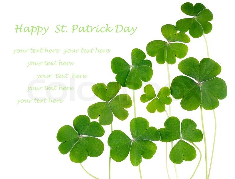 Shamrocks three leafed clovers isolated on white copy for Irish mail cart plans