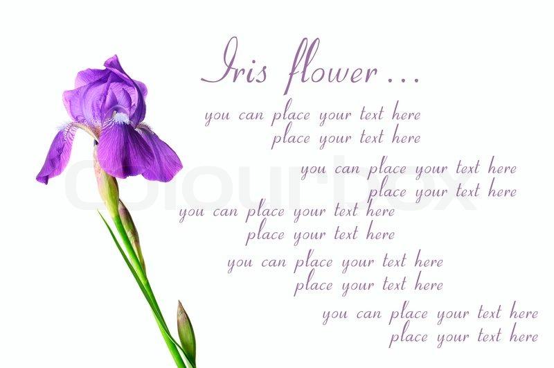 Blue Iris Spa Prices