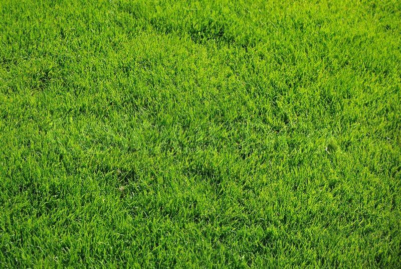 Fresh Spring Green Grass Natural Grass Texture Stock