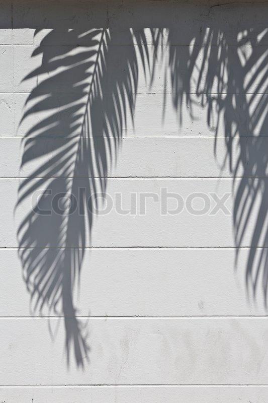 wei er zement wand mit einem schatten von palmen stockfoto colourbox. Black Bedroom Furniture Sets. Home Design Ideas