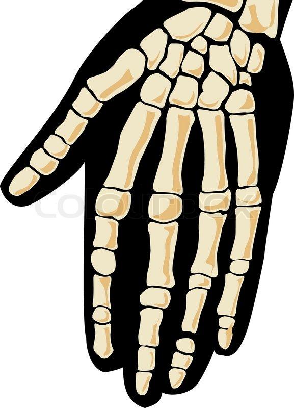 Human skeleton hand stock vector colourbox ccuart Choice Image
