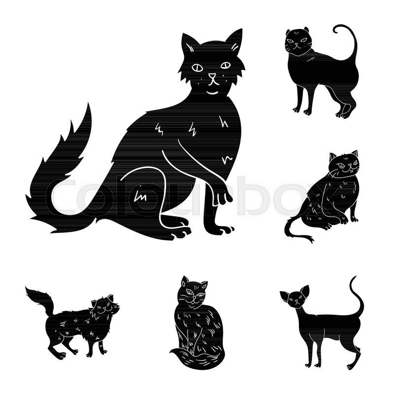 Breeds Of Cats Black Icons In Set Collection For Design Pet Cat