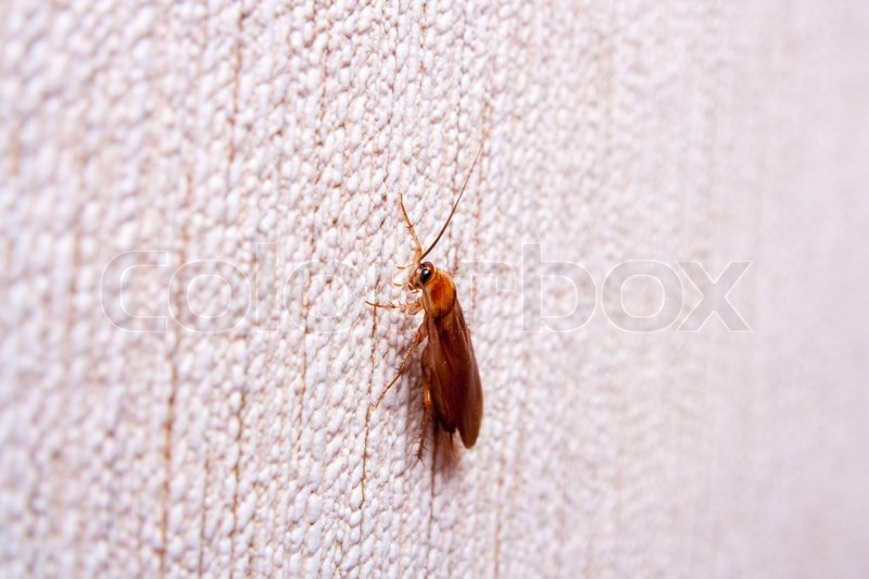Stock image of 'Cockroach on the wall'