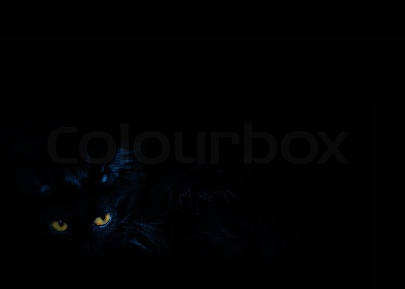 The Black Cat With Yellow Eyes On The Stock Image Colourbox
