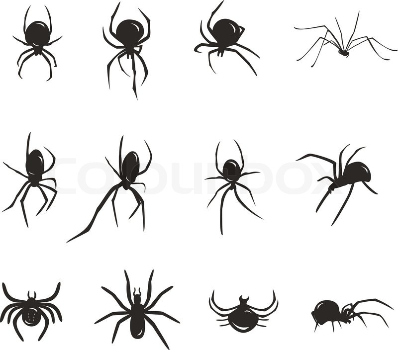 Black spider vector silhouette insects | Stock Vector ...