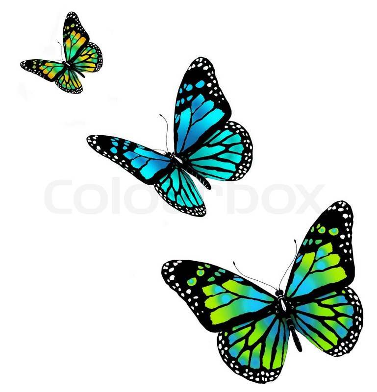 three butterflies on a white background stock photo tropical flowers clip art border tropical flower clipart black and white