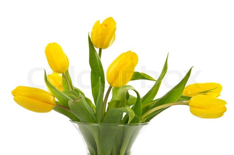 gelbe tulpen in der vase isoliert auf wei stockfoto. Black Bedroom Furniture Sets. Home Design Ideas