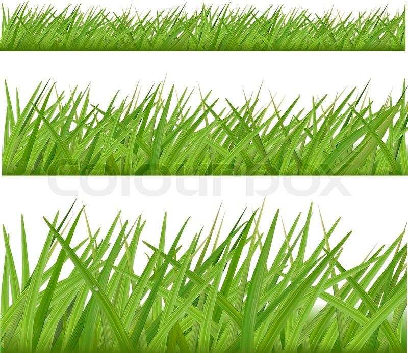 Three grass borders vector stock vector colourbox for Best grasses for borders