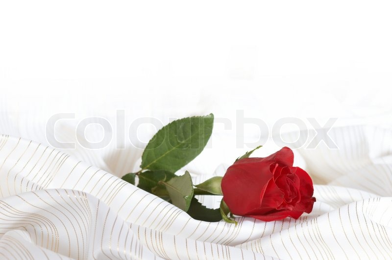 An Image Of Red Rose On The Bed Stock Photo Colourbox