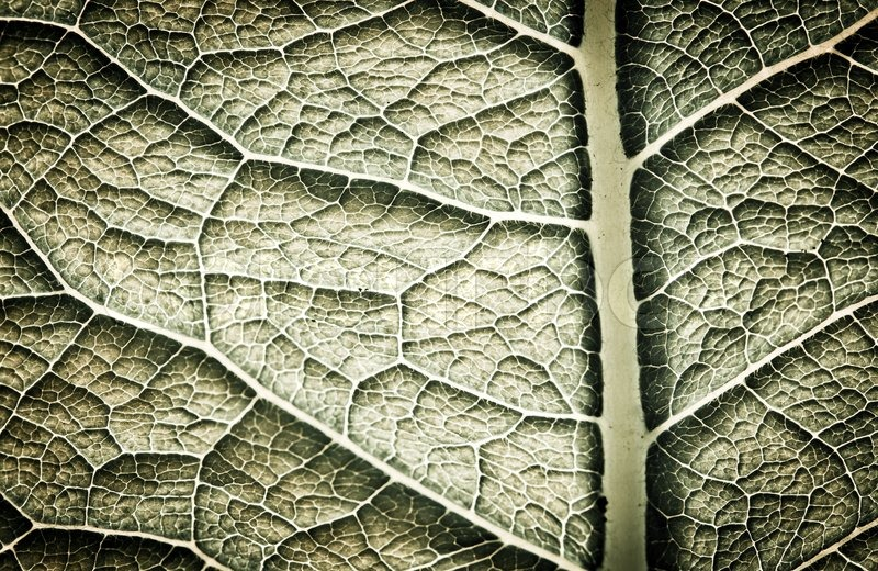 Dark leaf texture. Abstract spring background, stock photo