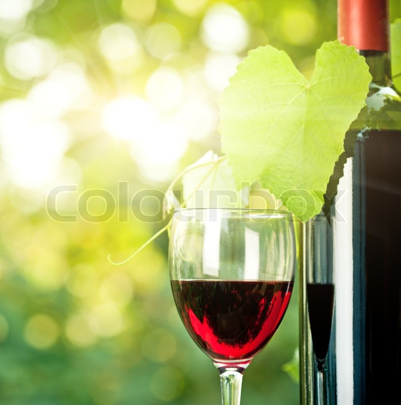 Red wine bottle one glass and young vine against natural for Red glass wine bottles suppliers