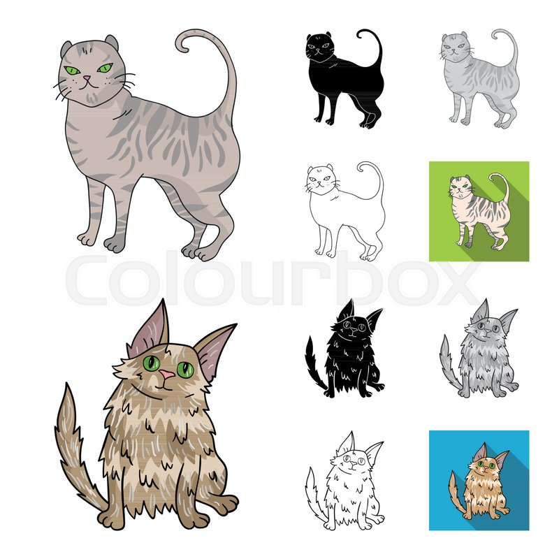 Breeds Of Cats Stock Vector Colourbox