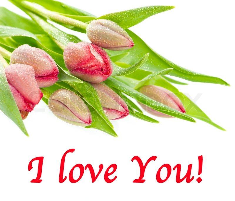 bouquet von frischen roten fr hling blumen tulpe mit wassertropfen auf wei em hintergrund. Black Bedroom Furniture Sets. Home Design Ideas