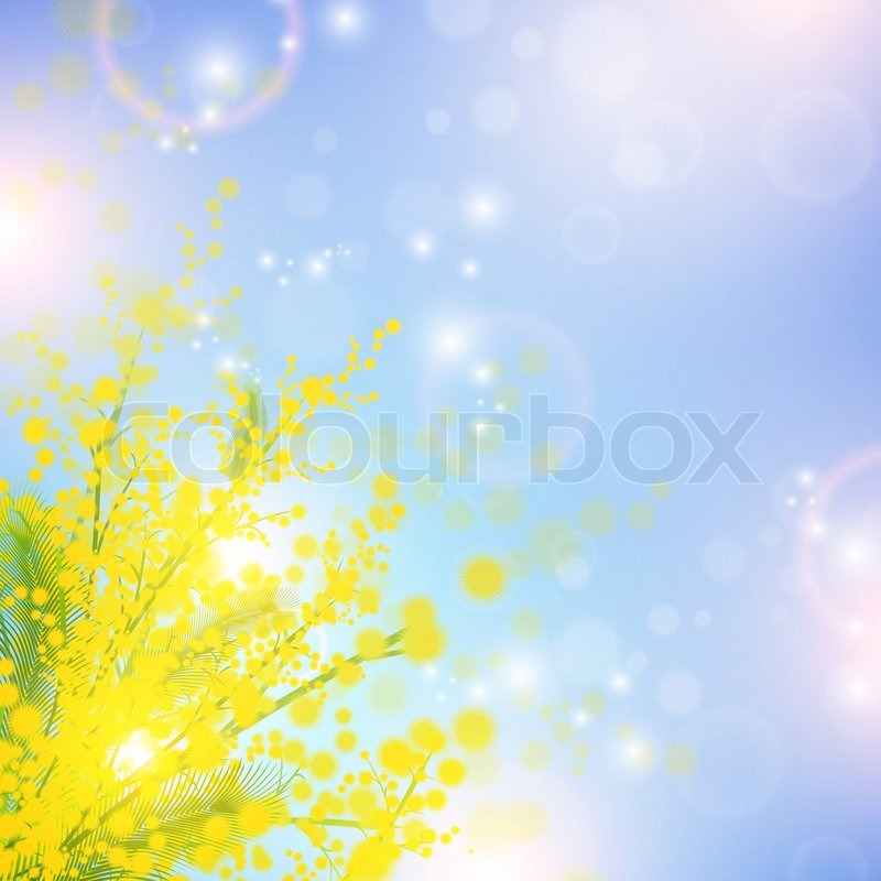 Mimosa Flowers on Stock Image Of  Mimosa Flowers Over Blue Sky And Magic Spring Lights