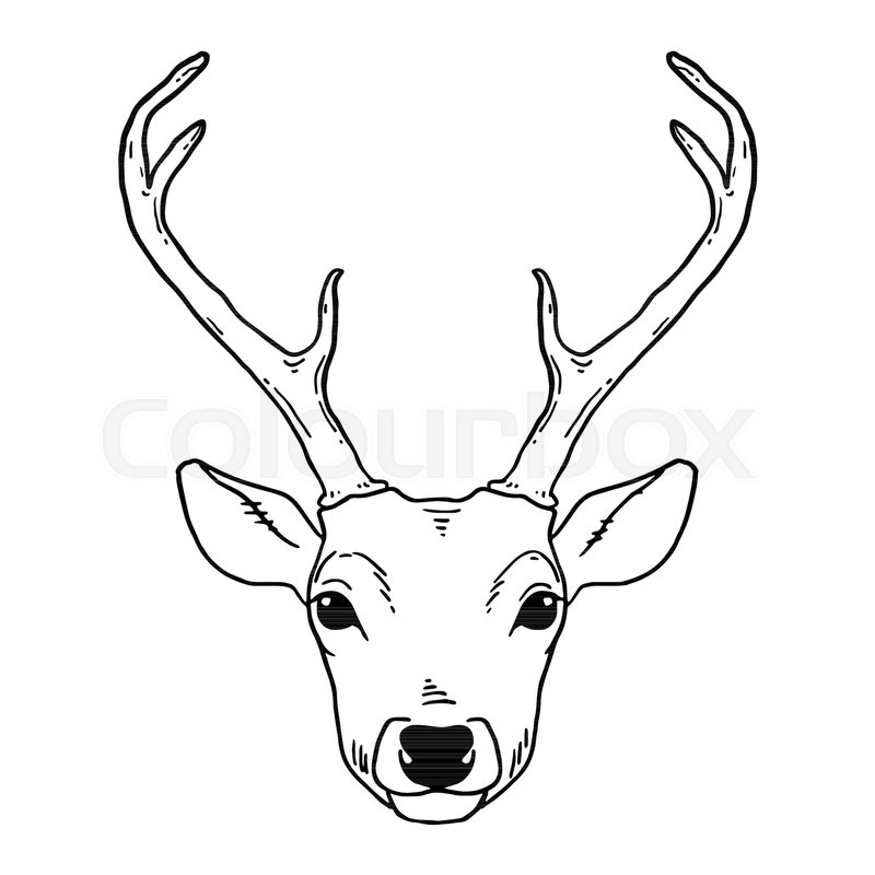 Hand Drawn Tribal Style Young Deer Stock Vector Colourbox