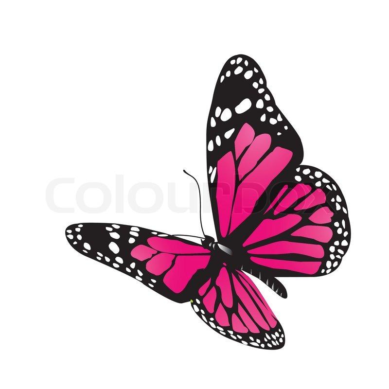 Vektor-Schmetterling | Vektorgrafik | Colourbox