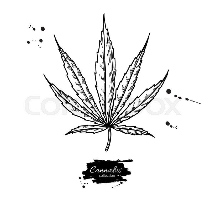 Marijuana Leaf Vector Drawing Cannabis Botanical Illustration Hemp