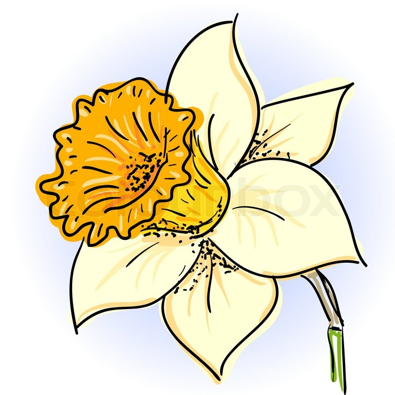 Billedresultat for påskeliljer tegning