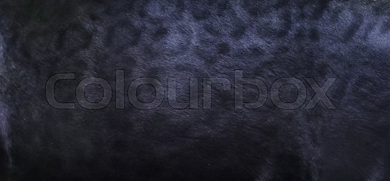 0fb3ea8df Black panther skin texture background | Stock image | Colourbox