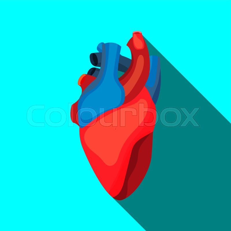 Human heart icon in cartoon style  For     | Stock vector