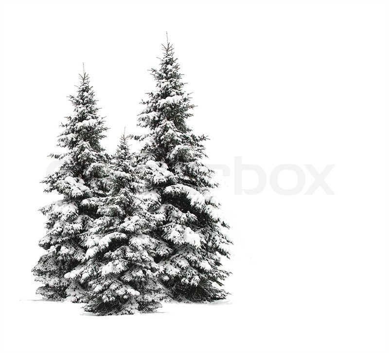 Snow Needle Pine Christmas Tree