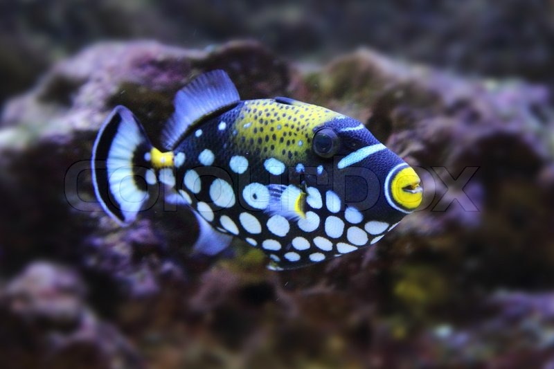 Color exotic fish from the deep sea stock photo colourbox for Deep sea fishes