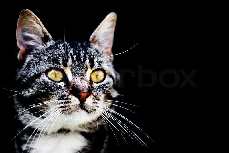 Rencontre chat lausanne