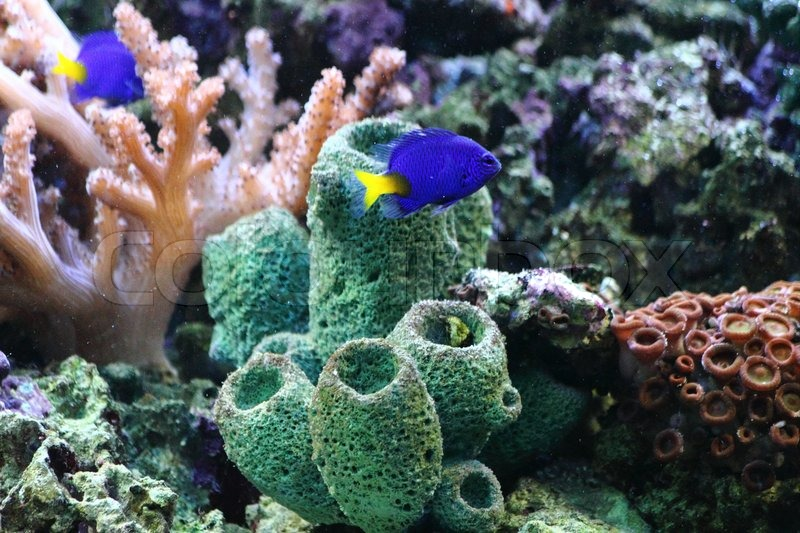 Natural sea plants as nice aquarium background stock for Piante marine