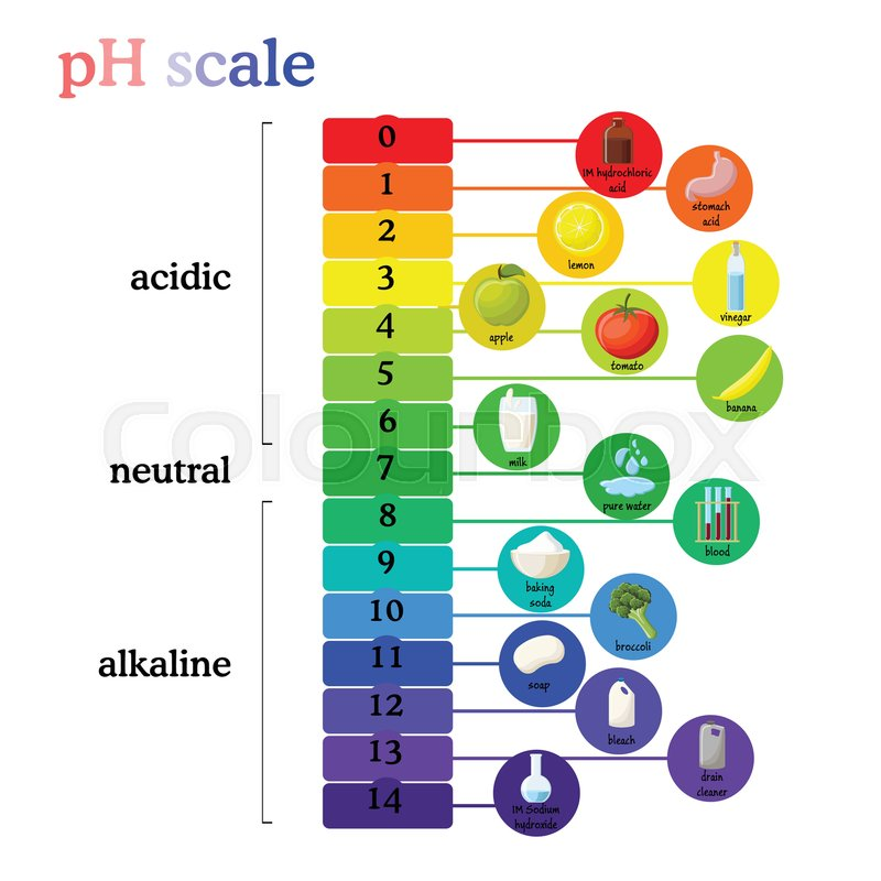 Ph Scale Diagram With Corresponding Acidic Or Alkaline Values For