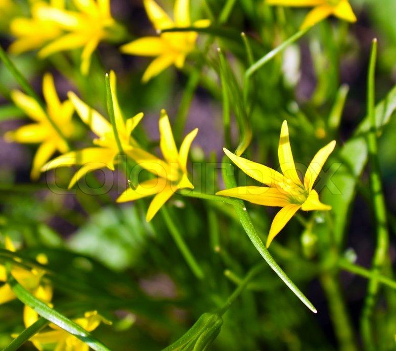 Yellow meadow flower on sunny spring day stock photo colourbox mightylinksfo