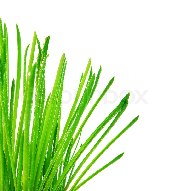 Green Grass Border Fresh Spring Herbal Leaves Abstract Wet Floral Plant Isolated On White Background Springtime Nature