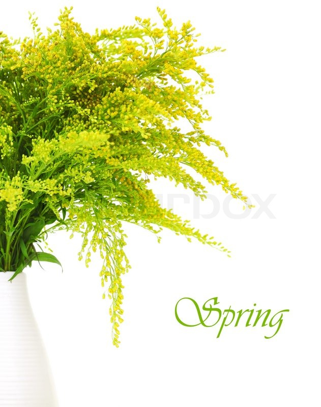Fresh green yellow spring flowers border in the vase isolated on fresh green yellow spring flowers border in the vase isolated on white background stock photo colourbox mightylinksfo